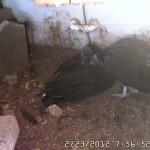 Random image: Pair at the Nest