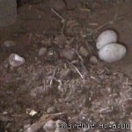 Random image: Eggs in the Nest