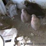 30 days (VultureCam.201205