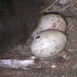 VultureCam.20120401_154824